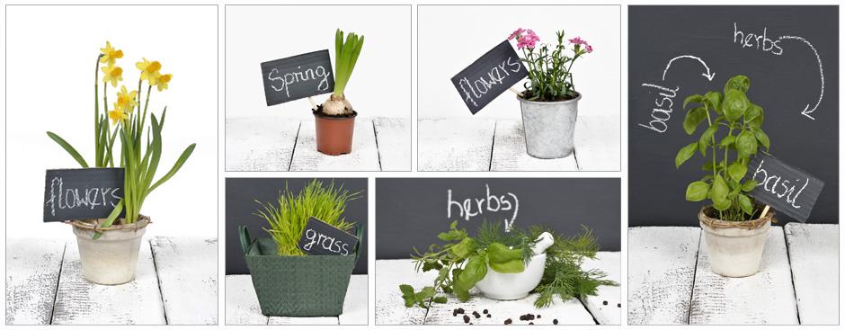rośliny i tekst - fotografie